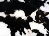 Koty są mistrzami kamuflażu
