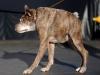 Najbrzydsze psy świata