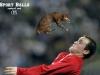 Piłki zastąpione przez koty