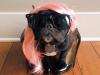 Trotter - najmodniejszy pies na Instagramie