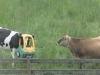 zwierzęta w tarapatach