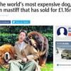 Oto najdroższy pies świata