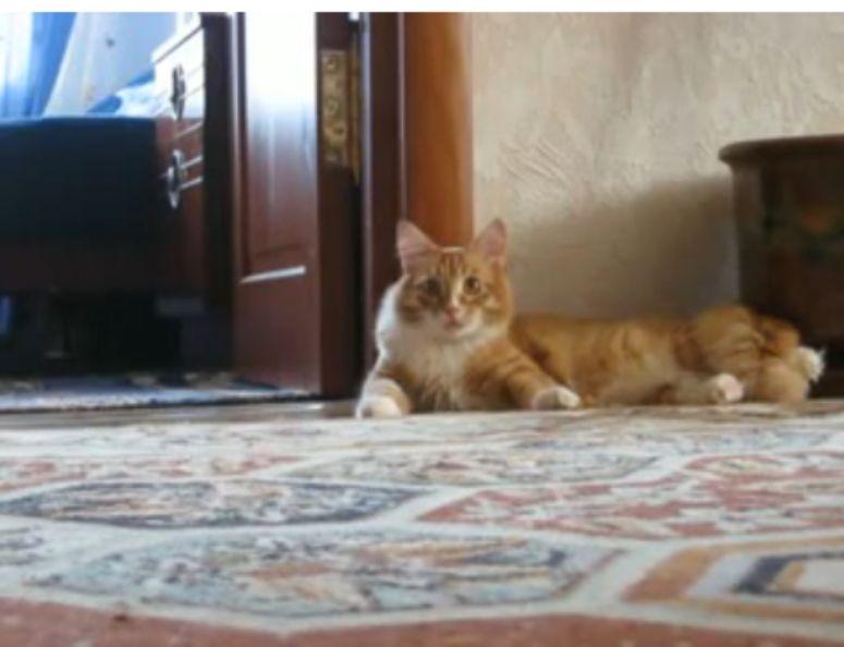 Co wystraszyło kota?