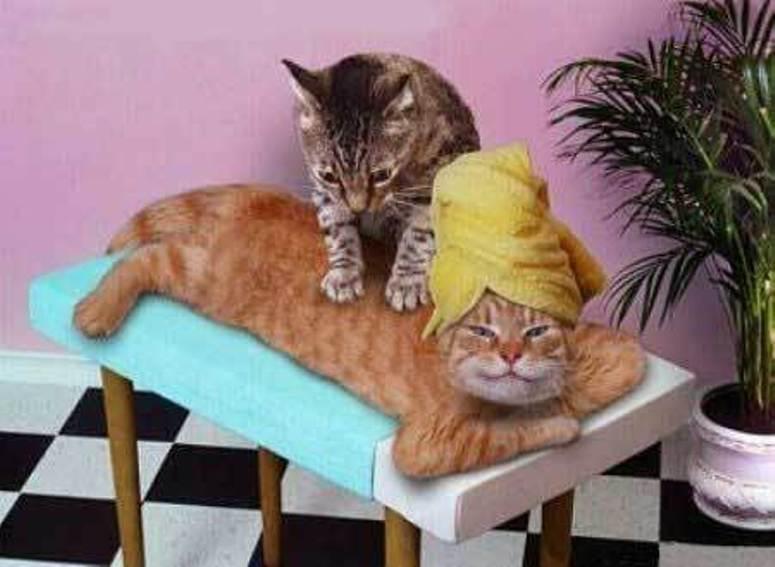 Kot masażysta