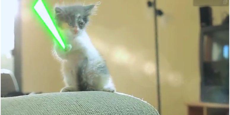 Koty walczą laserowymi mieczami