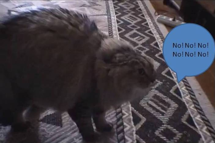 """Kot mówi """"No! No! No! No!"""""""
