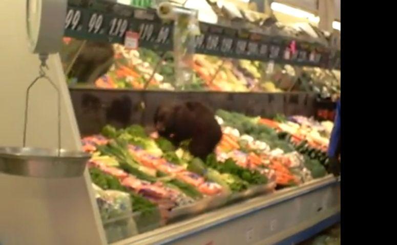 Niedźwiadek buszuje w supermarkecie