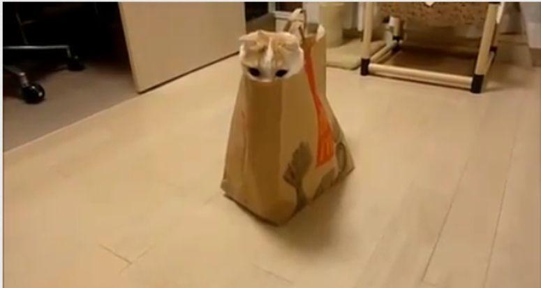 Kot chowa się w torbie z Mc Donaldsa