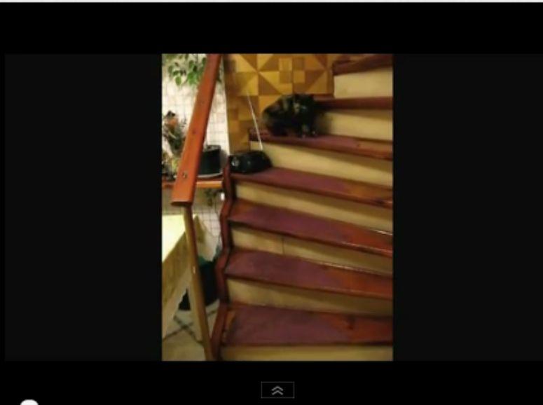 Kot tańczy na schodach