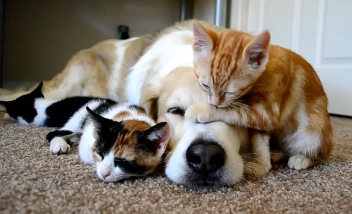 Małe kotki śpią z psem