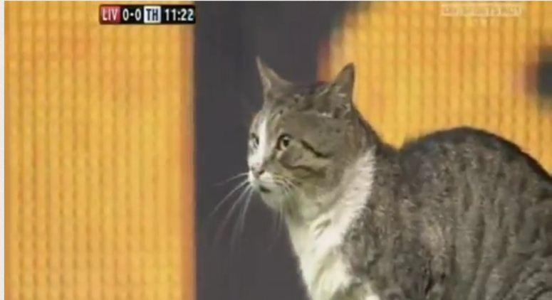 Kot atakuje boisko
