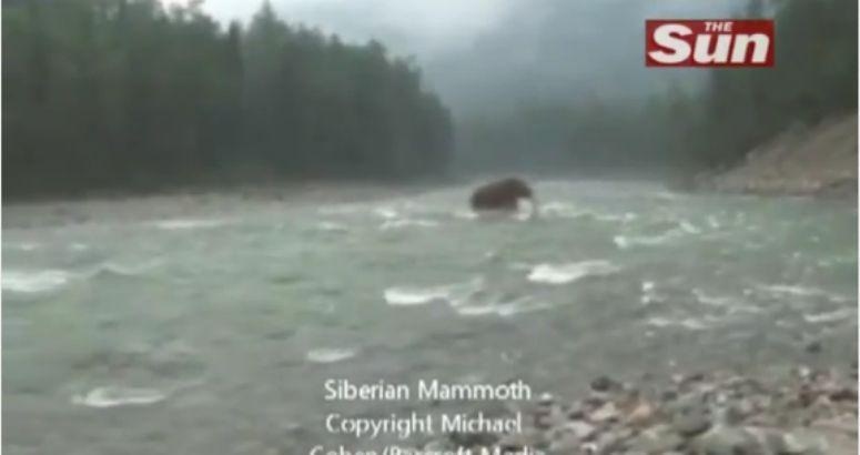 Włochaty mamut w rzece na Syberii