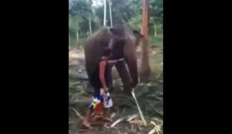 Słoń ukarał turystę