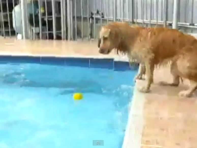 Pies kontra basen