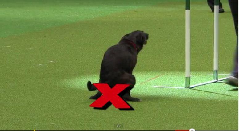 Pies załatwił się w telewizji