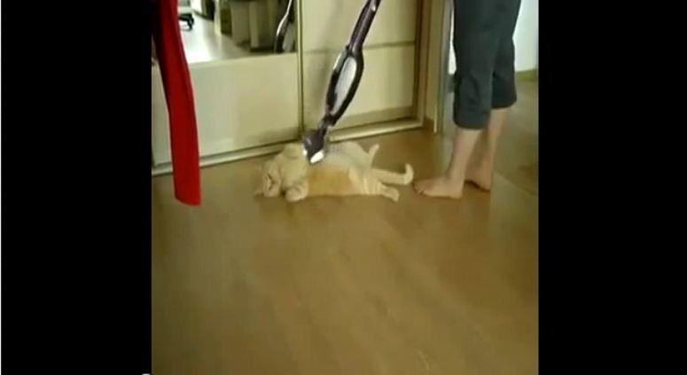 Odkurzanie kota