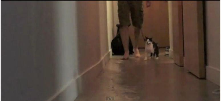Kot wyprowadza swojego pana na spacer
