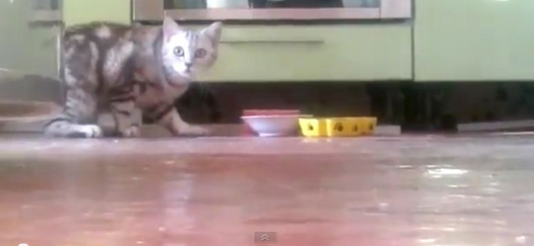 Bardzo wstydliwy kot