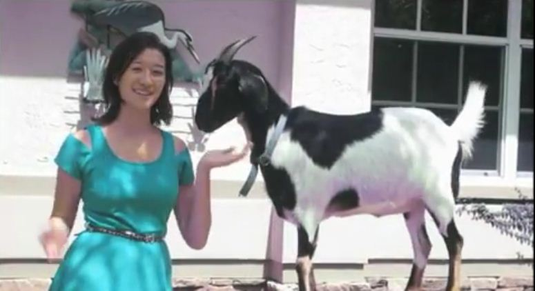 Koza na deskorolce