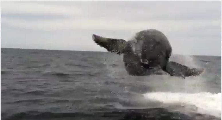 Gigantyczny wieloryb nagle wyskoczył z wody