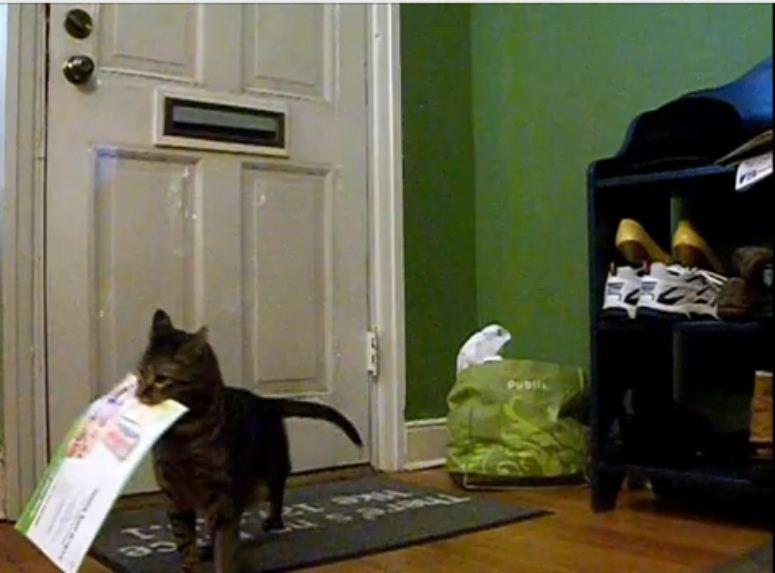 Kot odbiera listy od listonosza