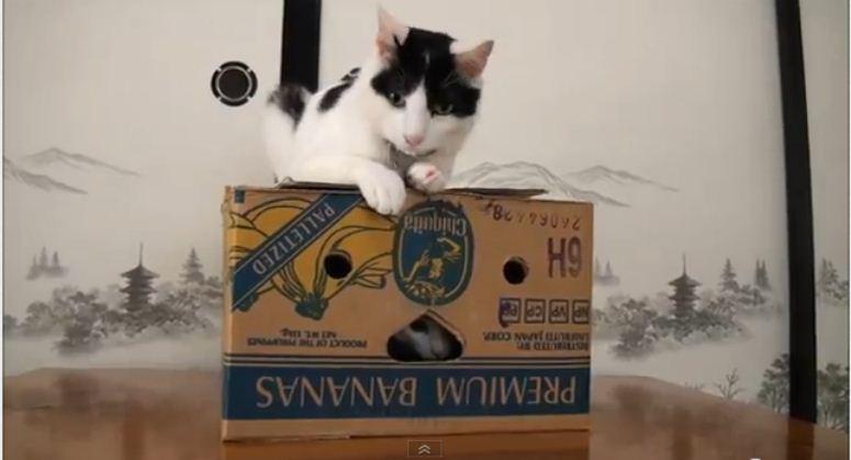 Dwa koty i pudełko po bananach
