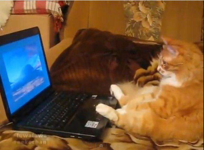 Kot ogląda film na laptopie