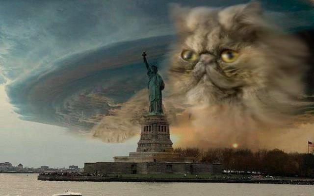 Kot nad Nowym Jorkiem - śmieszne i straszne