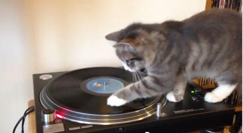 Kotek walczy z gramofonem