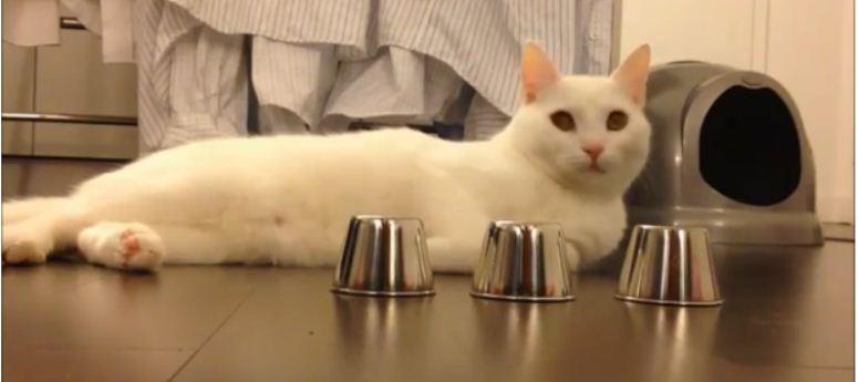 Kot, który jest mistrzem w trzy kubki