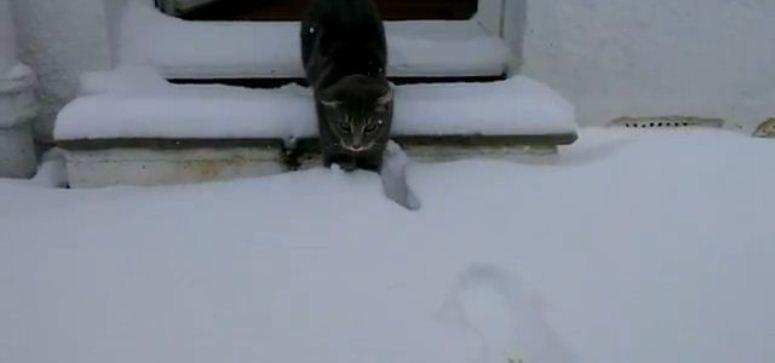 Kot po raz pierwszy widzi śnieg
