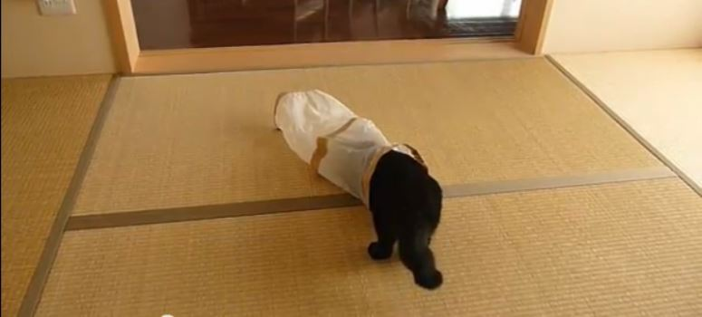 Kot wchodzi do rury, a tu nagle ...