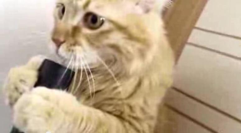 Kot, który czyści sobie język odkurzaczem