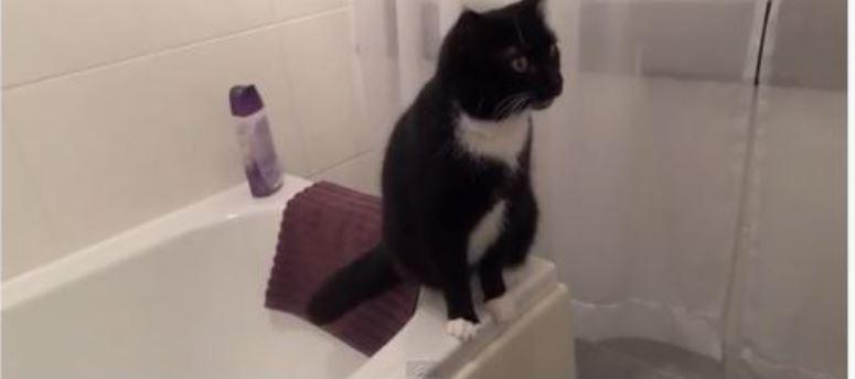 Kot pozuje przed lustrem