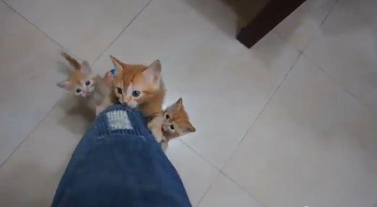 Kotki wspinają się po nodze