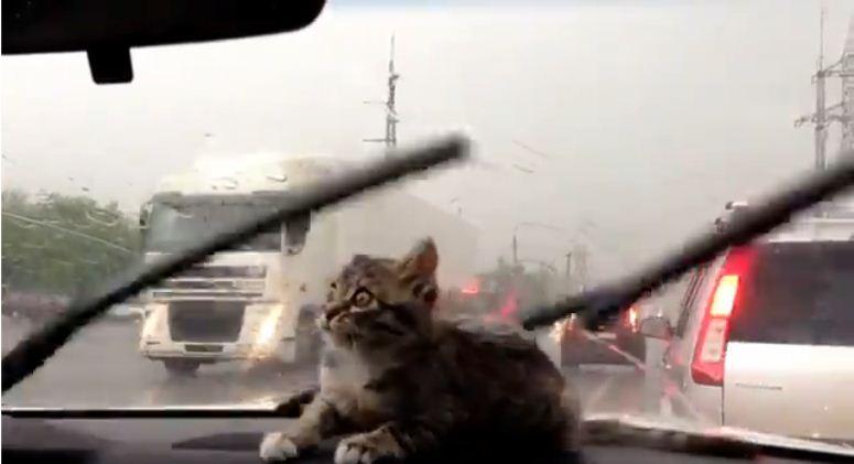 Kotek kontra wycieraczki