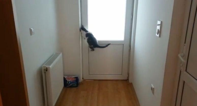 Kot, którego żadne drzwi nie zatrzymają