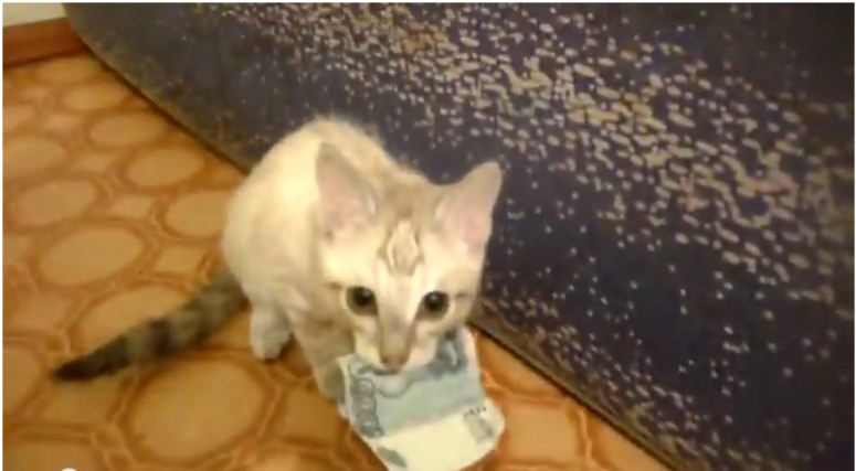 Kotek, który kradnie pieniądze