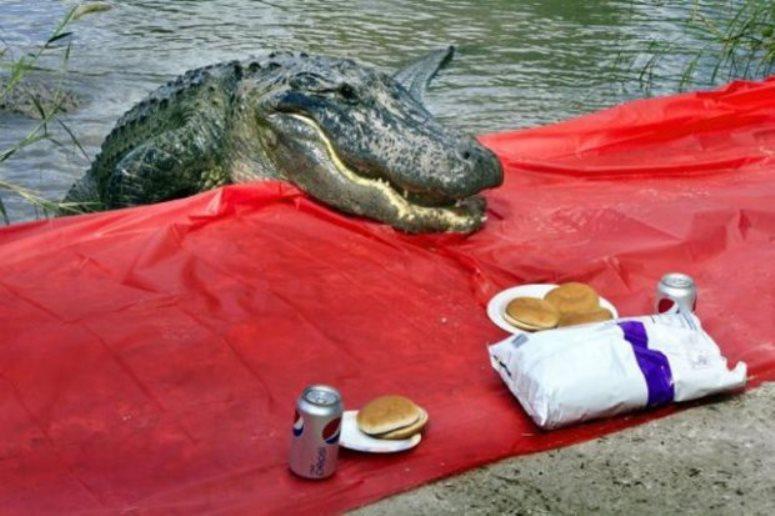 Krokoldyl przyszedł na piknik