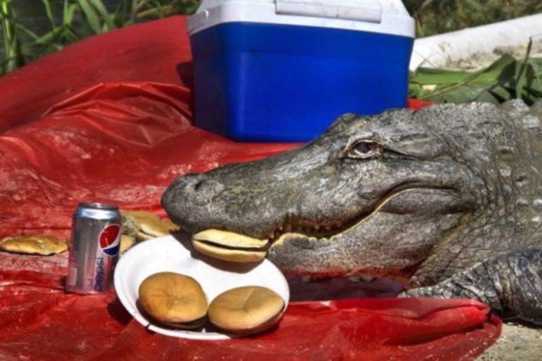Krokodyl przyszedł na piknik