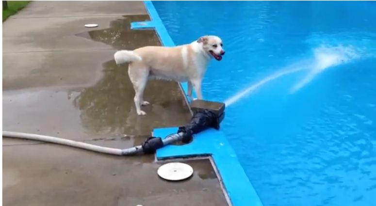 To prawdopodobnie nie jest najmądrzejsz pies na świecie ...