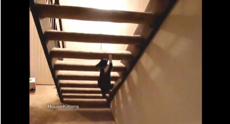 Kot wspina się po schodach