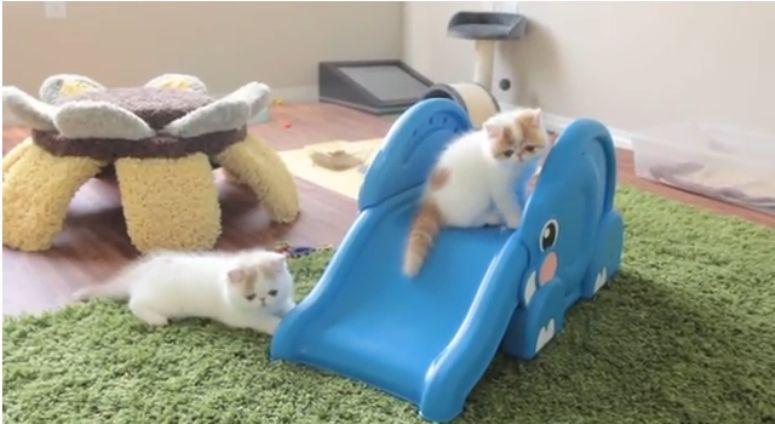 Małe kotki na zjeżdżalni