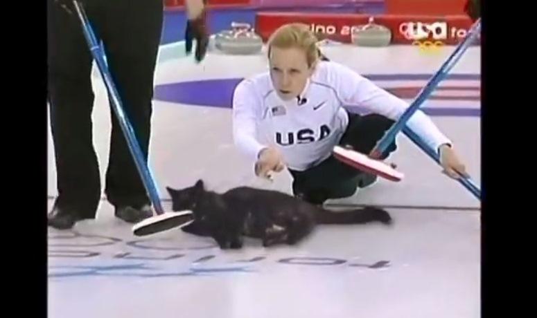 Curling kotami - nowa dyscyplina olimpijska?