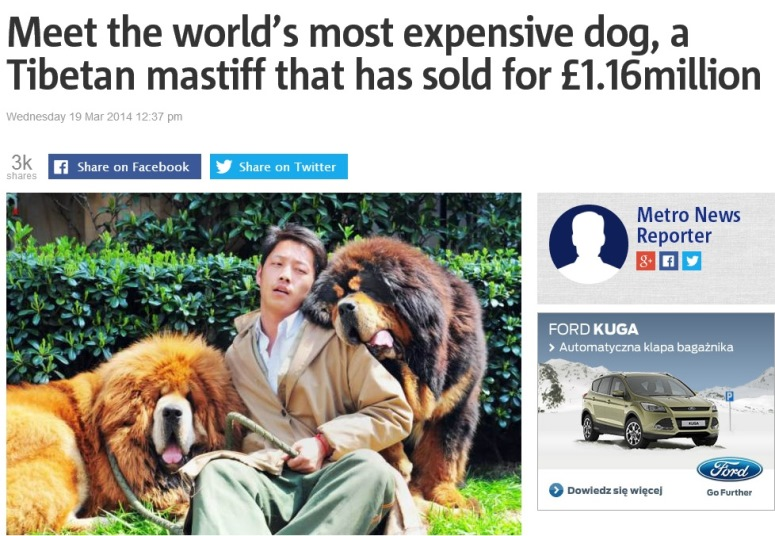 Mastiff po lewej to najdroższy pies świata