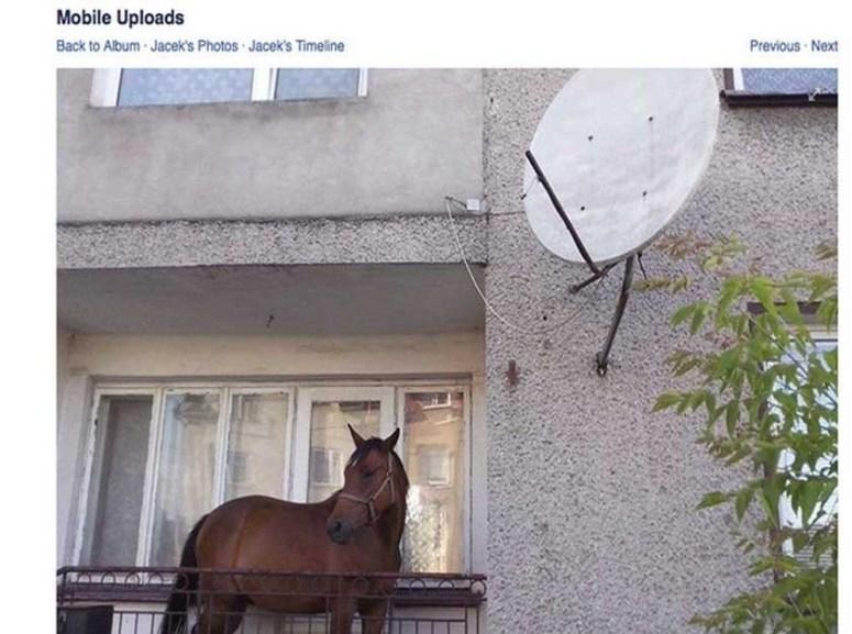 Koń na balkonie w Grajewie