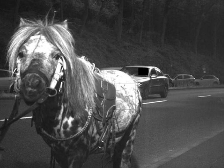 Koń został złapany przez fotoradar