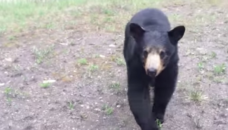 Niespodziewane spotkanie z niedźwiedziem