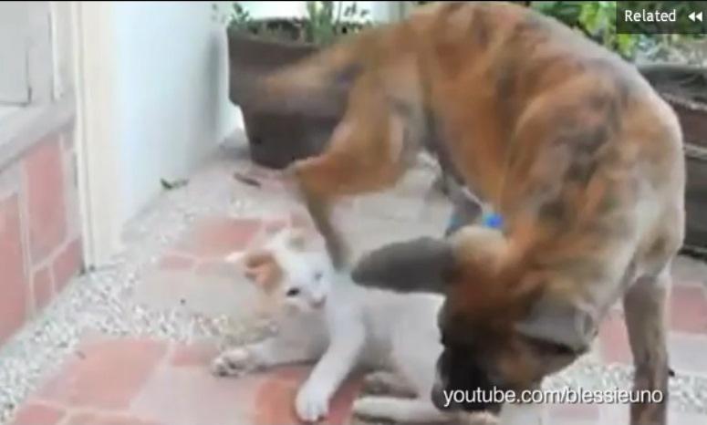Psy siedzą na kotach
