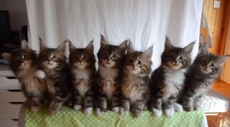 Siedem małych kotków śledzi latający przedmiot